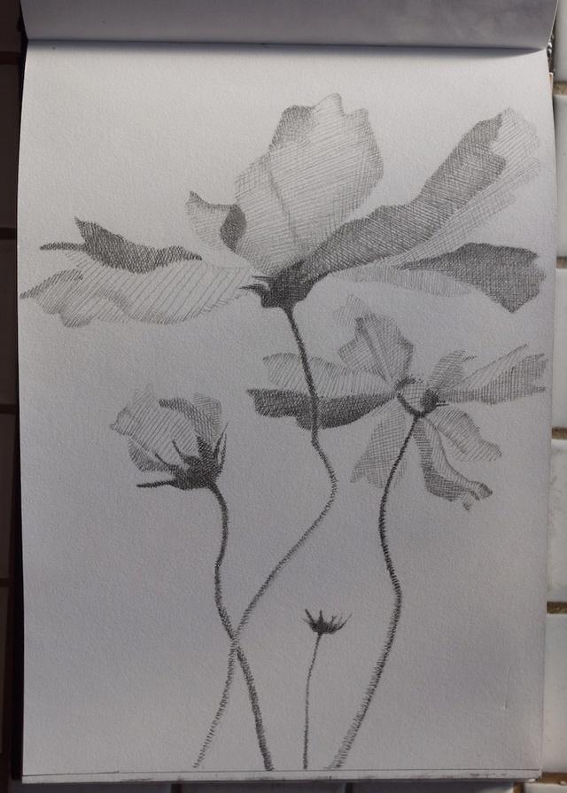 Fleurs  P1040216