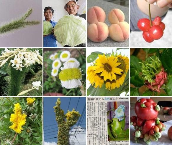 Les dangereux mythes de Fukushima - Page 2 Fukush11