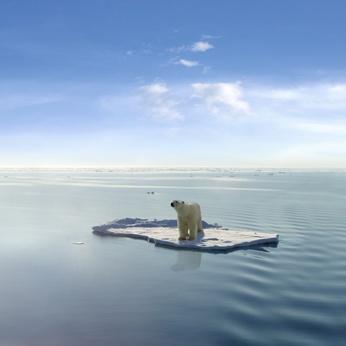 Sommes nous en train de vivre une mutation climatique de grande ampleur ?  Ours-a10