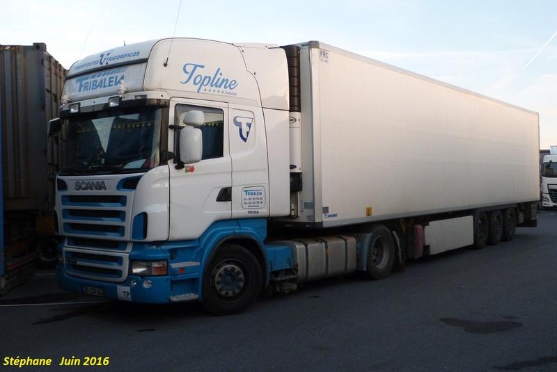 Fribaleia P1340053