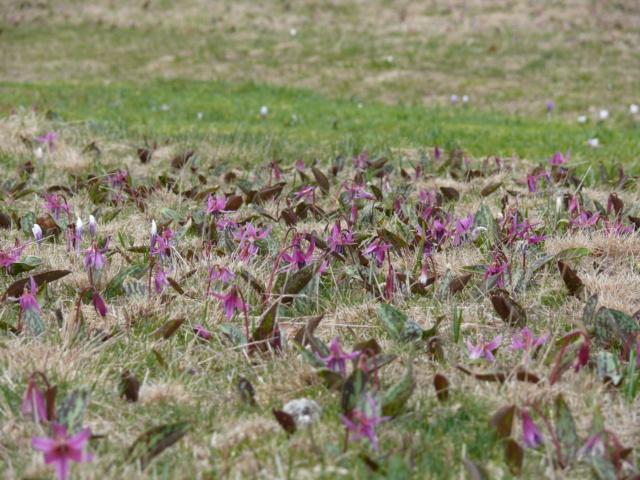 Sortie de terrain dans la Drôme Erytro10
