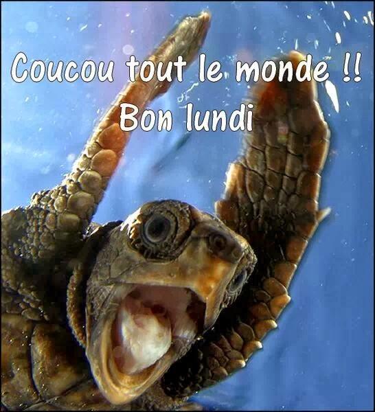 bonjour bonsoir du mois d'aout - Page 3 Abonlu10