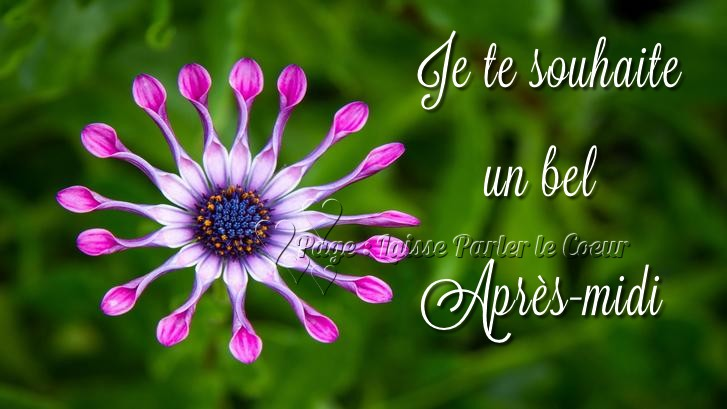 bonjour bonsoir du mois d'aout - Page 3 Bon-ap15