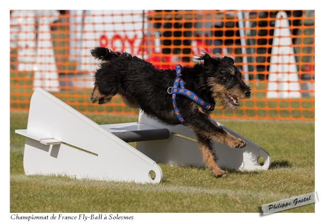 GPF FLYBALL 2012 - Page 3 Philip11