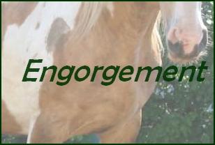 Visite des chevaux participant au CCE Veto210
