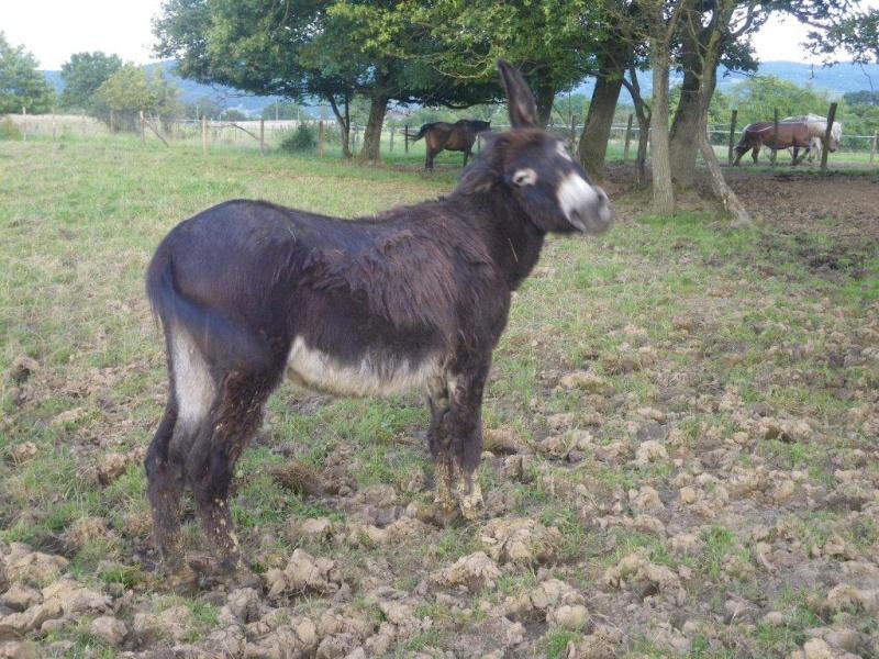 (dpt 71) A ADOPTER, MILAN et ZADIG, ânes communs, en famille d'accueil chez Charly71 - Page 5 Zadig10