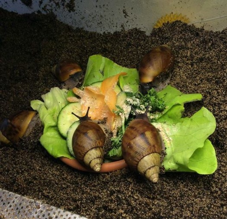 Je reviens dans le monde d'escargots  Image10