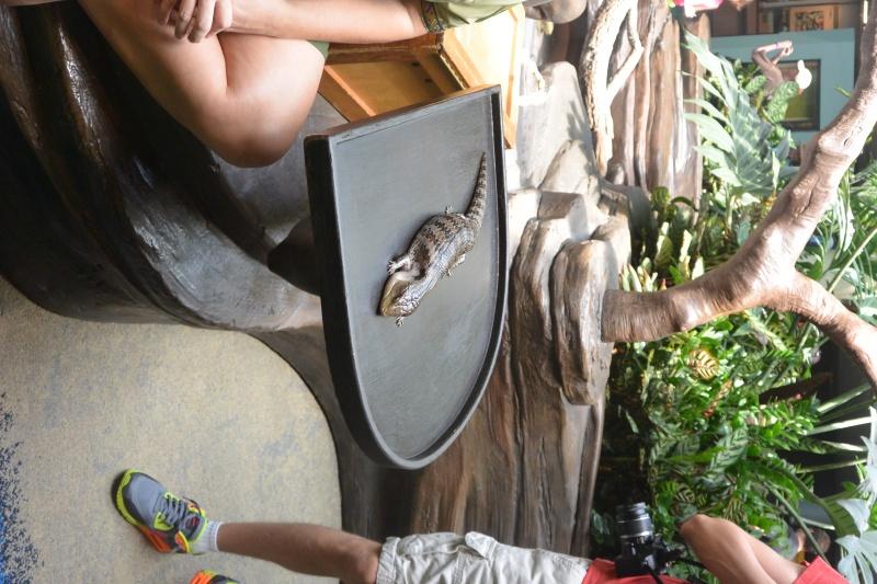 Flo et Géo découvrent la Floride et les Bahamas ! (DCL - USO - WDW) [MAJ le 26/06/16 - TR fini] - Page 11 Dsc_2213