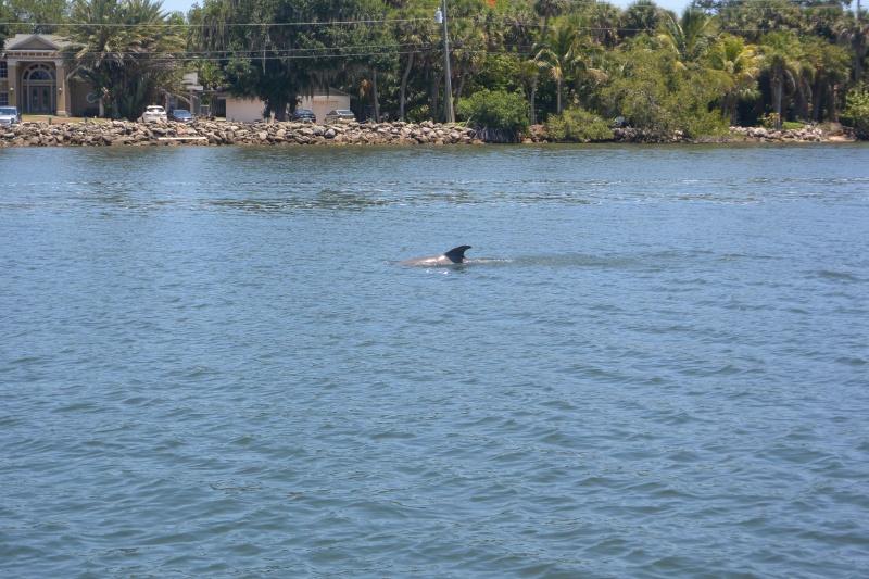 Flo et Géo découvrent la Floride et les Bahamas ! (DCL - USO - WDW) [MAJ le 26/06/16 - TR fini] - Page 11 Dsc_2226