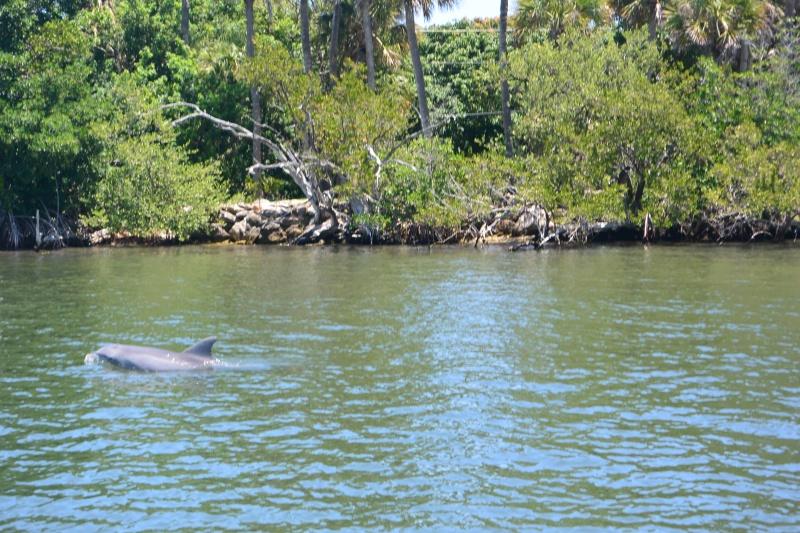 Flo et Géo découvrent la Floride et les Bahamas ! (DCL - USO - WDW) [MAJ le 26/06/16 - TR fini] - Page 11 Dsc_2231