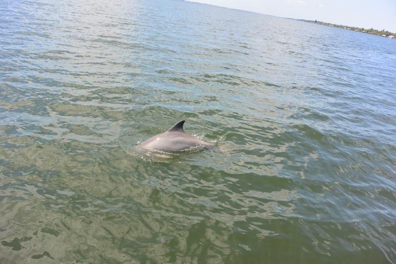 Flo et Géo découvrent la Floride et les Bahamas ! (DCL - USO - WDW) [MAJ le 26/06/16 - TR fini] - Page 11 Dsc_2311