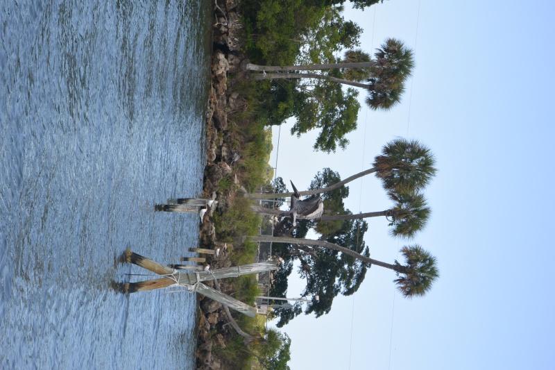 Flo et Géo découvrent la Floride et les Bahamas ! (DCL - USO - WDW) [MAJ le 26/06/16 - TR fini] - Page 11 Dsc_2312