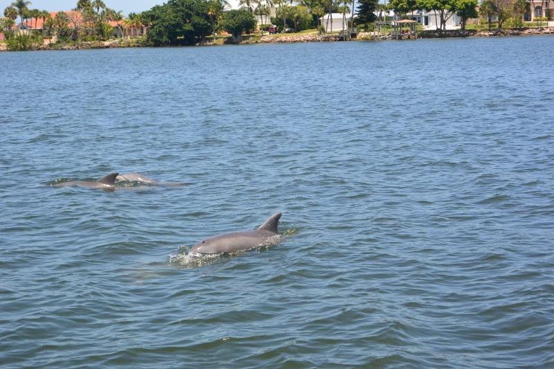 Flo et Géo découvrent la Floride et les Bahamas ! (DCL - USO - WDW) [MAJ le 26/06/16 - TR fini] - Page 11 Dsc_2313