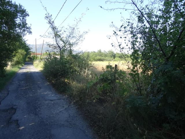 Journal de l'aménagement d'un terrain par une débutante : quelques photos récentes Dsc01133