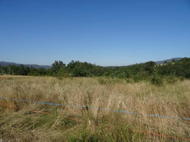 Journal de l'aménagement d'un terrain par une débutante : quelques photos récentes Dsc01134