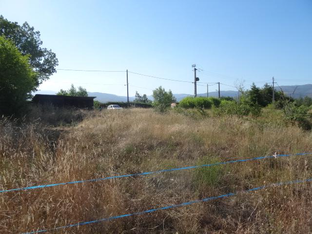 Journal de l'aménagement d'un terrain par une débutante : quelques photos récentes Dsc01135