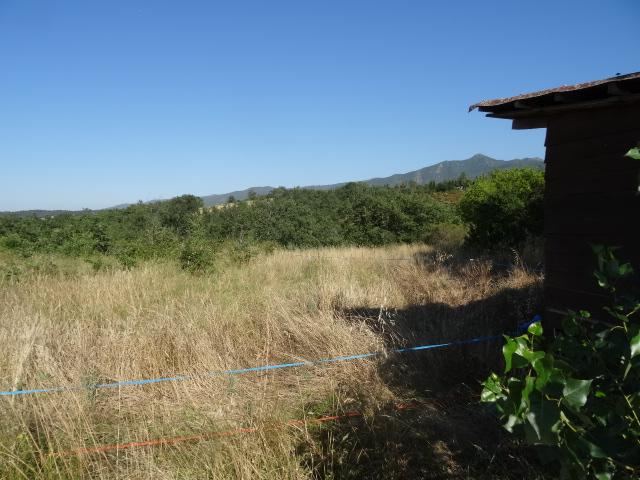 Journal de l'aménagement d'un terrain par une débutante : quelques photos récentes Dsc01137