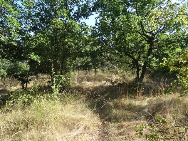 Journal de l'aménagement d'un terrain par une débutante : quelques photos récentes Dsc01144