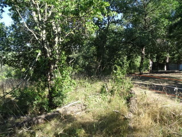 Journal de l'aménagement d'un terrain par une débutante : quelques photos récentes Dsc01145