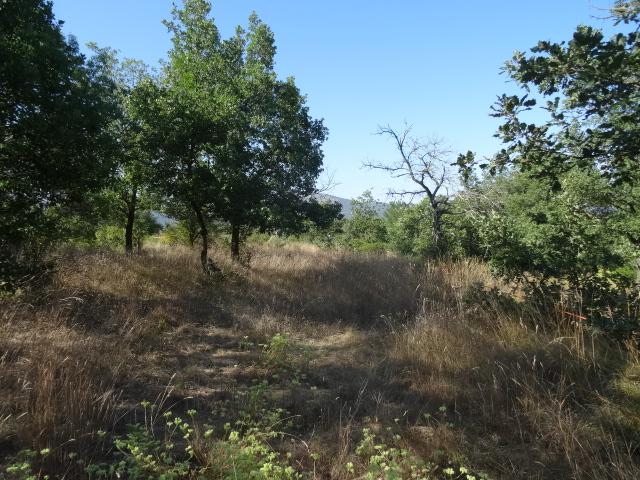 Journal de l'aménagement d'un terrain par une débutante : quelques photos récentes Dsc01146