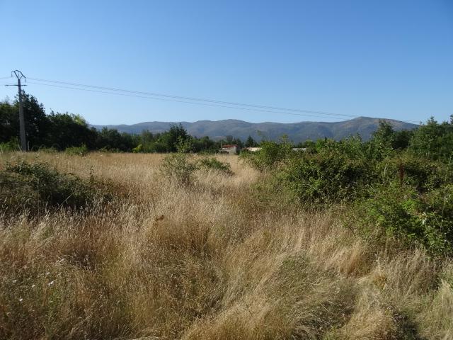 Journal de l'aménagement d'un terrain par une débutante : quelques photos récentes Dsc01150