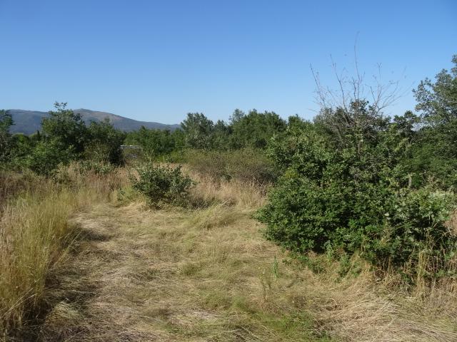 Journal de l'aménagement d'un terrain par une débutante : quelques photos récentes Dsc01151