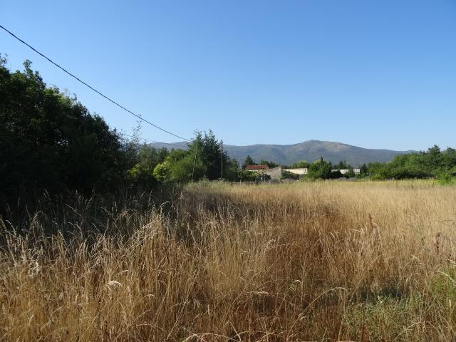 Journal de l'aménagement d'un terrain par une débutante : quelques photos récentes Dsc01152