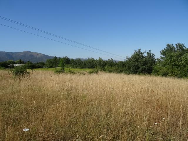 Journal de l'aménagement d'un terrain par une débutante : quelques photos récentes Dsc01153
