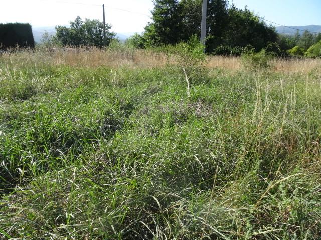 Journal de l'aménagement d'un terrain par une débutante : quelques photos récentes Dsc01154