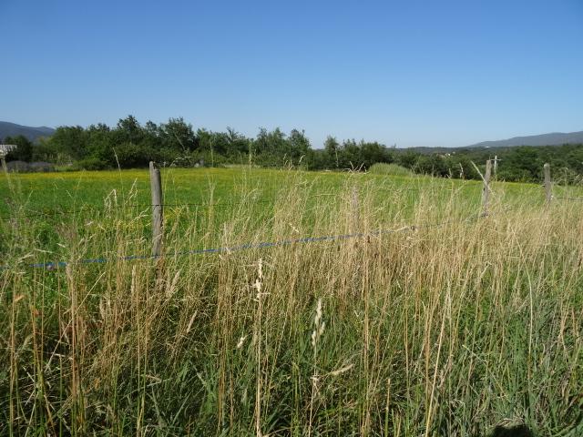 Journal de l'aménagement d'un terrain par une débutante : quelques photos récentes Dsc01155