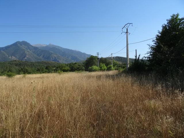 Journal de l'aménagement d'un terrain par une débutante : quelques photos récentes Dsc01156