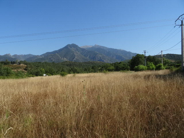 Journal de l'aménagement d'un terrain par une débutante : quelques photos récentes Dsc01158