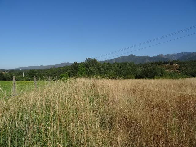 Journal de l'aménagement d'un terrain par une débutante : quelques photos récentes Dsc01159