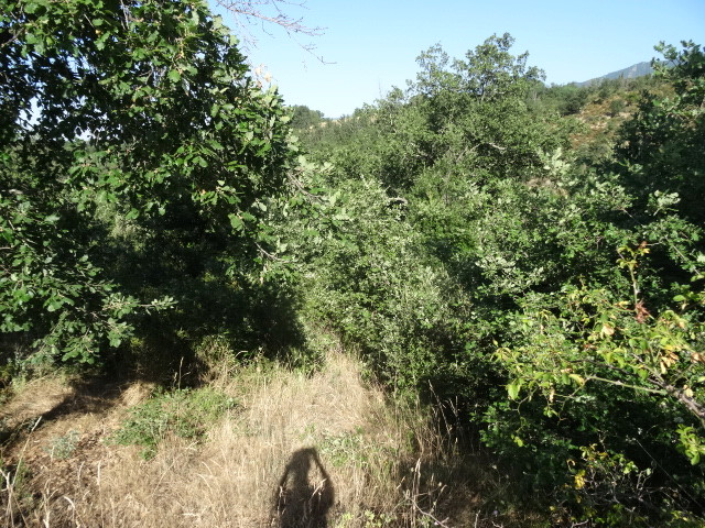 Journal de l'aménagement d'un terrain par une débutante : quelques photos récentes Dsc01160