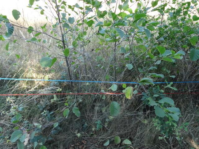 Journal de l'aménagement d'un terrain par une débutante : quelques photos récentes Dsc01170