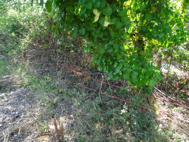 Journal de l'aménagement d'un terrain par une débutante : quelques photos récentes Dsc01180