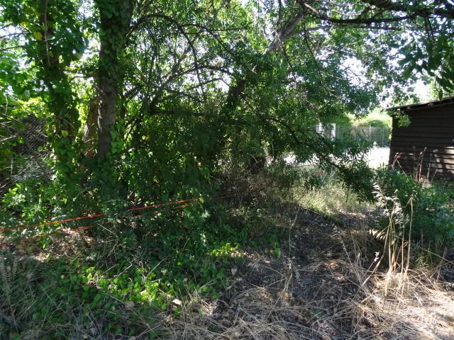 Journal de l'aménagement d'un terrain par une débutante : quelques photos récentes Dsc01181