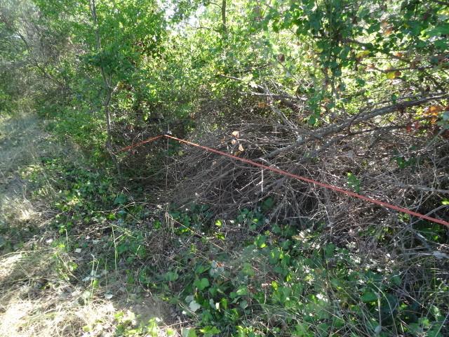 Journal de l'aménagement d'un terrain par une débutante : quelques photos récentes Dsc01187