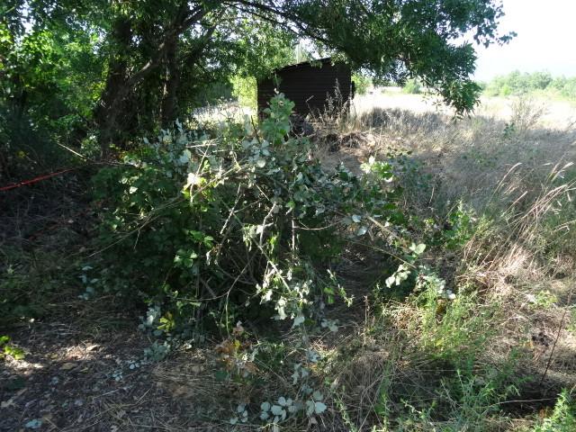 Journal de l'aménagement d'un terrain par une débutante : quelques photos récentes Dsc01188