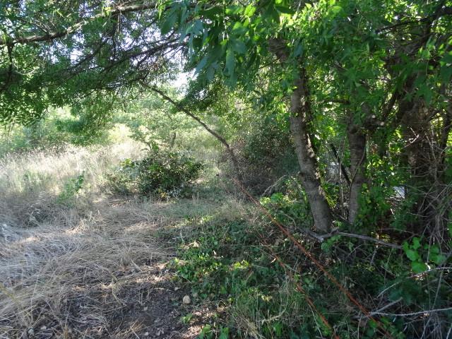 Journal de l'aménagement d'un terrain par une débutante : quelques photos récentes Dsc01189