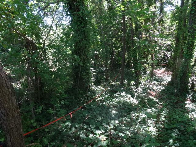Journal de l'aménagement d'un terrain par une débutante : quelques photos récentes - Page 3 Dsc01213