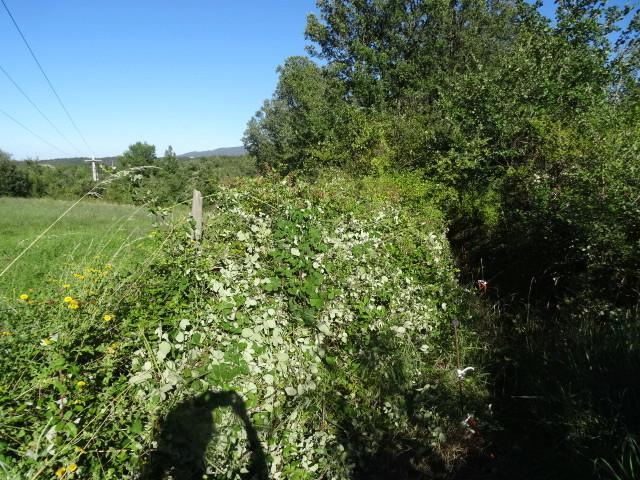 Journal de l'aménagement d'un terrain par une débutante : quelques photos récentes - Page 3 Dsc01218