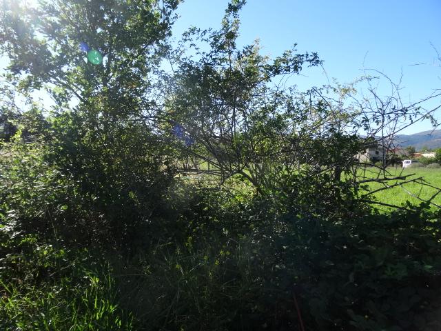 Journal de l'aménagement d'un terrain par une débutante : quelques photos récentes - Page 3 Dsc01219
