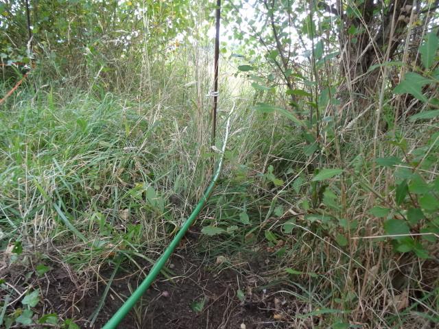 Journal de l'aménagement d'un terrain par une débutante : quelques photos récentes - Page 4 Dsc01227