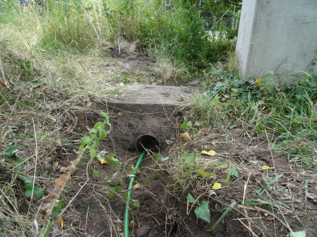 Journal de l'aménagement d'un terrain par une débutante : quelques photos récentes - Page 4 Dsc01237