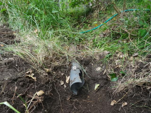 Journal de l'aménagement d'un terrain par une débutante : quelques photos récentes - Page 4 Dsc01239