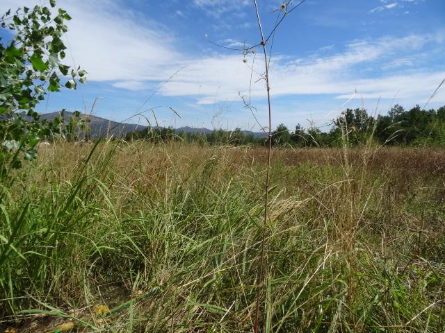 Journal de l'aménagement d'un terrain par une débutante : quelques photos récentes - Page 4 Dsc01244