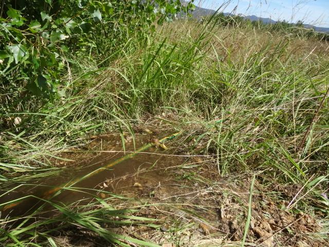 Journal de l'aménagement d'un terrain par une débutante : quelques photos récentes - Page 4 Dsc01246