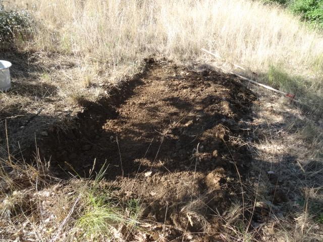 Journal de l'aménagement d'un terrain par une débutante : quelques photos récentes - Page 4 Dsc01247