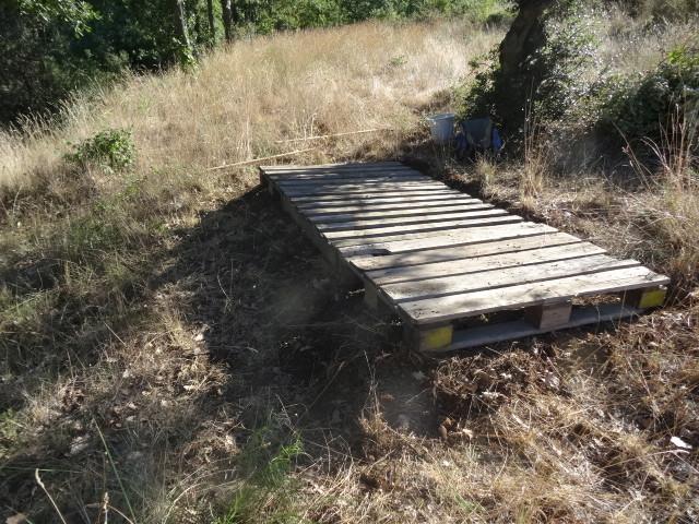 Journal de l'aménagement d'un terrain par une débutante : quelques photos récentes - Page 4 Dsc01250
